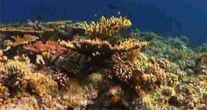 2015_0418_coralreefs267